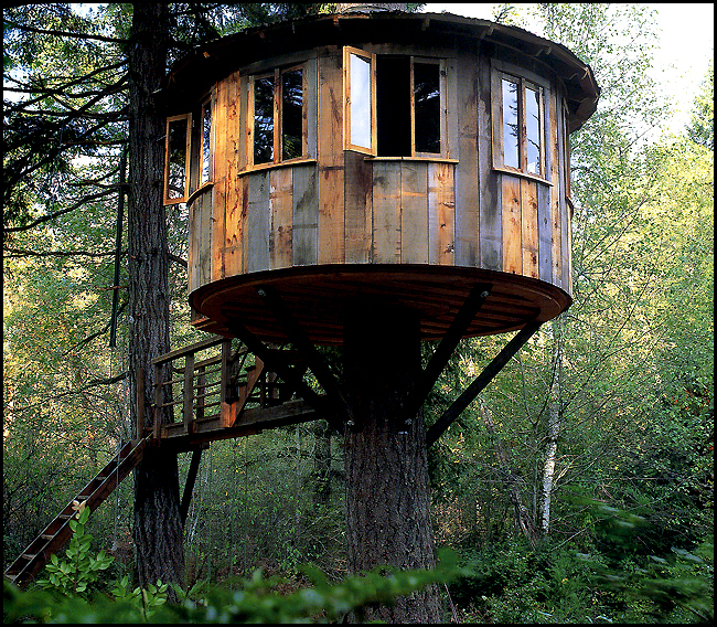 Interview With Pete Nelson Of Animal Planet's Treehouse